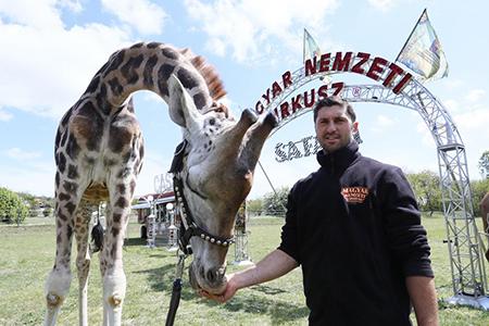 Óriási élmény Szadán a Magyar Nemzeti Cirkusz 'Szafari Parkja'!